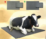 Stuoia di gomma Antifatigue animale attenuata della scuderia del cavallo della stuoia della mucca/cavallo delle stuoie