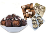 Uova del fungo secco, fungo di Shiitake liscio