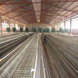 Kooi van de Laag van de Kip van het Landbouwbedrijf van het Gevogelte van Oeganda van de goede Kwaliteit de Automatische