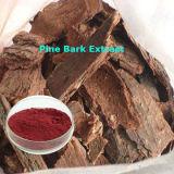 Extrait de l'écorce de pin de haute qualité en poudre
