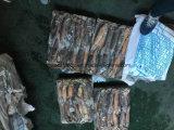 Illex Kalmar mit Schokoladen-Farbe (150-200G)