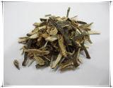 Poudre verte normale d'extrait de 10:1 de Vatica Mangachapoi de peau de mandarine d'usine