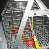 Automatische Kooien van een Type van Batterij van de Laag van het Ei van de kip/Jonge kip de Automatische