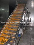 Grande quarto frio para o centro do armazém das frutas mantimento fresco e processamento dos vegetais e de distribuição