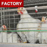 Cages de poulet de Chambre de ferme avicole du Kenya avec les buveurs et les câbles d'alimentation automatiques