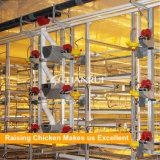 L'élevage de poulets de chair de l'équipement de poulets de chair automatique cage pour de plus en plus de poulets de chair
