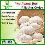 Высококачественный органический чеснок ослепительно белый чеснок, Китай