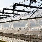 야채를 위한 큰 그리스 물자 플레스틱 필름 다중 경간 온실