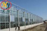Agricultura abrangem várias folhas de PC /Policarbonato para estufas plantas