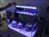 Luz usada do tanque do aquário do diodo emissor de luz 28W do recife coral