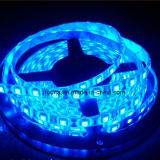 12V5050 60LED SMD Water-Proof/M Fitas LED RGB flexível