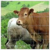 De Omheining van het vee