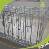 Cage de /Pig de caisses de /Limit de stalle de caisses de gestation de porc de matériel de bétail à vendre