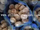 Jinxiangからの新しいニンニクの新しい収穫