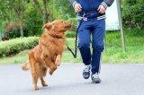 Manos libres Ligera reflectante ajustable correa de perro de nylon Correr Caminar Correr para Medio Grande perros pequeños, Negro