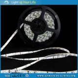 LED Strip Light (5Meter/Roll)