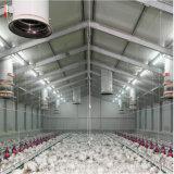 Qualität direkt Fabrik-Stahlkonstruktion-vom grossen Huhn-Bauernhof