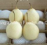 Chinesische frische Ya Birne mit gutem Preis