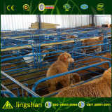 Granja de las casas del parto de las ovejas de la estructura de acero