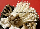 Venta caliente el cultivo de setas de esterilizador Withhigh Calidad