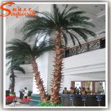 Kunstmatige Palm van de Glasvezel van de Zijde van China de In het groot Palm Aangepaste