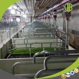 Fabricante de equipamiento del cultivo de cerdo de la parada del cerdo de China