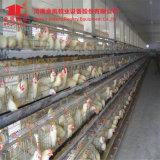 128 عصافير نوع يغلفن دجاجة طبقة قفص