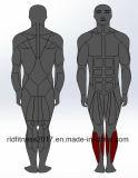 مطرقة قوة عظم ساق ظهر [فلإكسيون], لياقة [جم] ناد تمرين عمليّ تجهيز