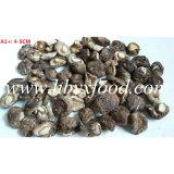 Fungo di Shiitake liscio secco non inquinato naturale di 100% 4-5cm