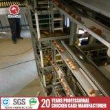 Tipo H automática de la jaula de Pollos Parrilleros para granjas de Pakistán