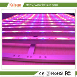 Accesorio de iluminación de LED profesional crecer