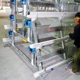 Costruzione d'acciaio con il macchinario di pollicultura nel prezzo basso