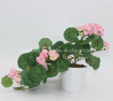 Furniture Complete를 위한 높은 Imitation Artificial Flower Pennywort