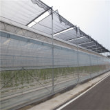 De la Chine d'usine serre chaude en verre directement pour le légume
