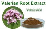 0.4%-0.8% Valeriansäure-beruhigender Baldrian-Wurzel-Auszug, Schlaflosigkeit aushärtend