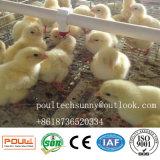 Heet Verkopend een Kooi van het Landbouwbedrijf van het Gevogelte van de Kip van het Frame voor Jonge kippen
