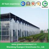 Invernadero de una sola capa de la hoja de la PC del precio de fábrica del surtidor de China