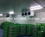 /Salle de stockage à froid pour la viande Poissons Fruits Légumes