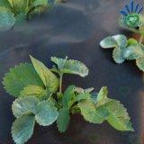Non-Woven PP Spunbond для ткани управлением Weed земледелия