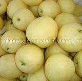 Свежая новая груша урожая
