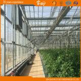 Agribusiness를 위한 다중 Span Glass Greenhouse