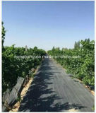 Esteira agricultural preta tecida PP de Weed