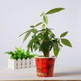 Schöne Fabrik-Preis-Papier-Pflanzencup vom China-Lieferanten