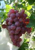 과일 덮개를 위한 비 길쌈된 직물