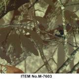 Impressions de transfert de l'eau de Tcs, film de plongement hydraulique, numéro réel B99qcl002b de configuration de Camo d'arbre de film d'impression de PVA