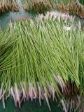 Fiori artificiali dell'erba Gu-Jy-Grass001 della cipolla