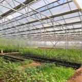 Feuille en plastique imperméable à l'eau de toiture de polycarbonate clair pour la serre chaude de jardins