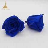 Bijoux bleu préservé de longue durée a augmenté de fleurs pour l'Arrangement immortel