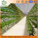Sistema commerciale di coltura idroponica del substrato per il pomodoro