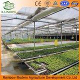 Sistema de irrigação do gotejamento dos equipamentos da economia da água da estufa